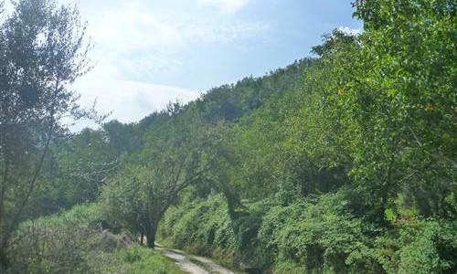 Terreno agricolo chiamacasa agenzia immobiliare di for Capannone di 300 metri quadrati