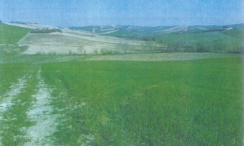 Terreno_agricolo_Fano_1149-h