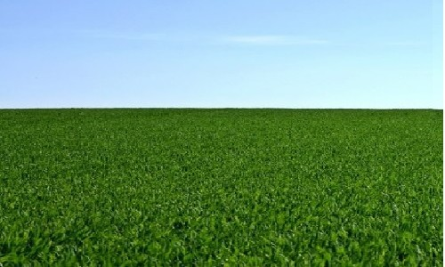 terreno_agricolo_1230-h